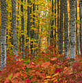 Autumn Grove by Dustin  LeFevre