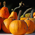 Autumn Harvest Gourds by Tony Ramos