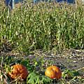 Autumn Harvest by Robert Meyers-Lussier