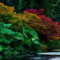 Autumn Has Begun by Venetta Archer