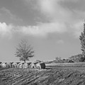 Autumn Hay Bw by Bill Wakeley