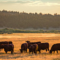 Autumn Herd by Todd Klassy