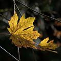 Autumn Highlight by MaryJane Armstrong