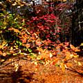 Autumn Hues by Paul Sachtleben