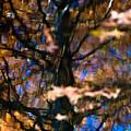Autumn Impressions by Venetta Archer
