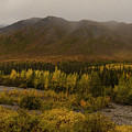 Autumn In August Brooks Range Alaska by Teresa A and Preston S Cole Photography