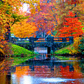 Autumn In Boston by Marie Jamieson
