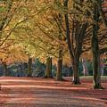 Autumn In Clifton, Bristol by Carolyn Eaton