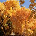 Autumn In Curtin by Steven Natanson