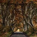 Autumn In Dark Hedges by Jaroslaw Blaminsky