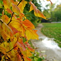 Autumn In Ellenberger by Kitrina Arbuckle