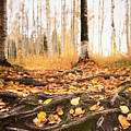 Autumn In Finland by Sandra Rugina