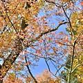 Autumn In Full Swing by Jeramey Lende