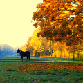 Autumn In Kathrines Way by Nigel Bangert