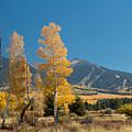 Autumn In Hart Pairie by Susan Westervelt