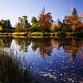 Autumn In Maine Usa by Vishwanath Bhat