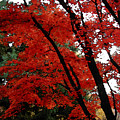 Autumn In New England by Melissa A Benson