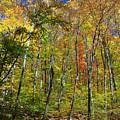 Autumn In Schooley's Mountain Park 2 by Allen Beatty