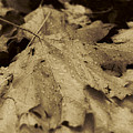 Autumn In Sepia by Scott Ballingall
