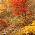 Autumn In Shenandoah by Stephen  Vecchiotti