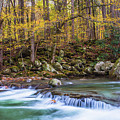 Autumn In Smoky Mountains National Park  by Carol Mellema