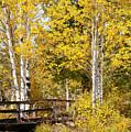 Autumn In Teton National Park by Bob Phillips