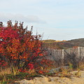Autumn In The Dunes by Catherine Reusch Daley