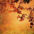 Autumn In The Fog. by Alex Lim