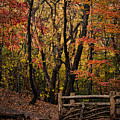 Autumn In The Rambles by Chris Lord
