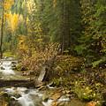 Autumn In The St Joe by Idaho Scenic Images Linda Lantzy