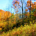 Autumn In The Tennessee Hills by Kristin Elmquist