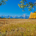 Autumn In The Tetons by Megan Martens