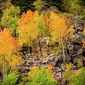 Autumn In The Uinta Mountains by TL Mair