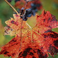 Autumn In The Vineyard by Lori Leigh