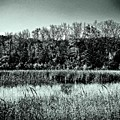 Autumn In The Wetlands - Black And White by Frank J Casella