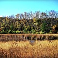 Autumn In The Wetlands by Frank J Casella