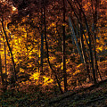 Autumn In The Woods by Thomas Woolworth