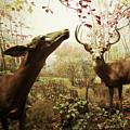 Autumn In The Woods by Zena Zero