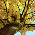 Autumn Is My Favourite Colour by Patricia LaHuis