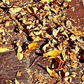 Autumn Is On The Way by Elisabeth Derichs