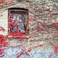 Autumn Ivy by Karen Molenaar Terrell
