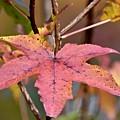Autumn by Jeramey Lende