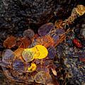 Autumn Jewels.. by Al  Swasey