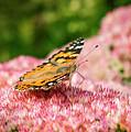 Autumn Joy Visitor by Jean Noren
