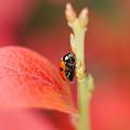 Autumn Ladybird by Mickey At Rawshutterbug