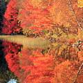 Autumn Lake Scenery by Gary Corbett