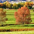 Autumn Landscape Dream by James BO  Insogna