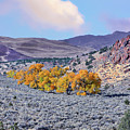 Autumn Landscape In Northern Nevada. by Greg Chapel