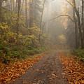 Autumn Lane by Mike  Dawson