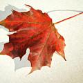 Autumn Leaf by Cliff Norton